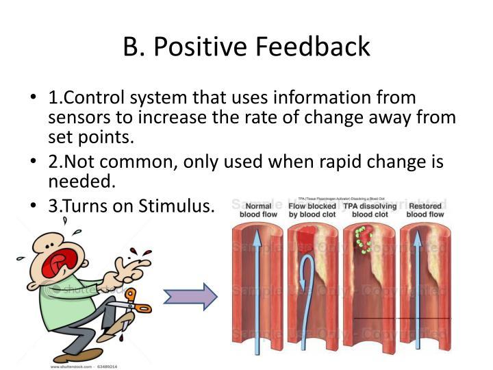 B. Positive Feedback