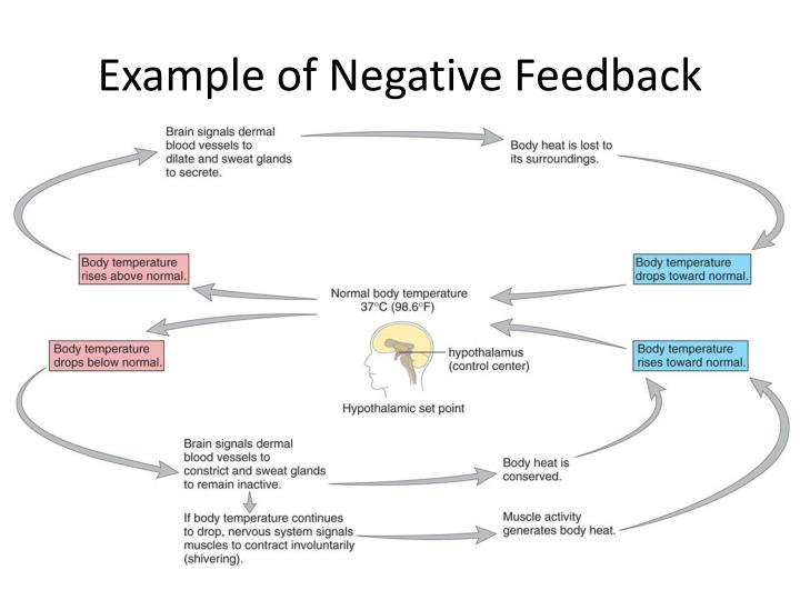 Example of Negative Feedback