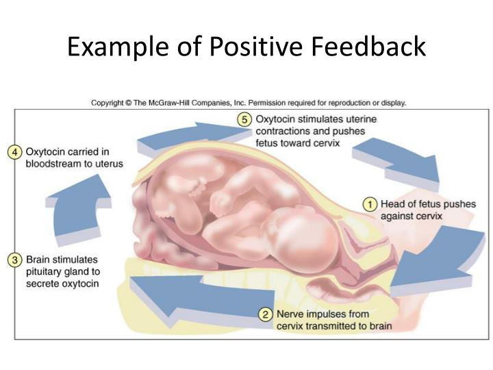 Example of Positive Feedback