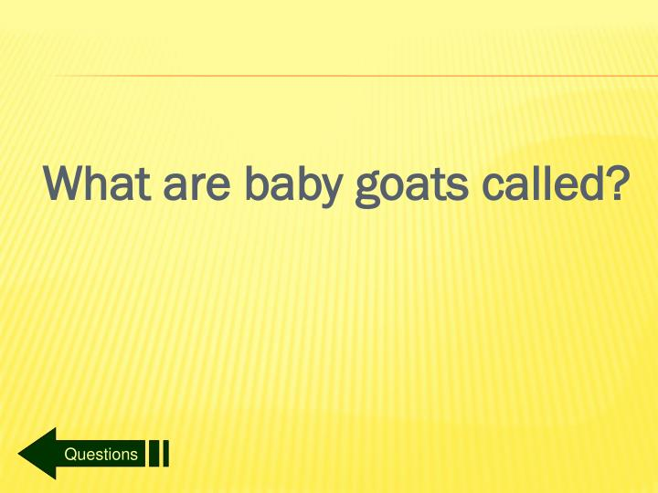 What are baby goats called?
