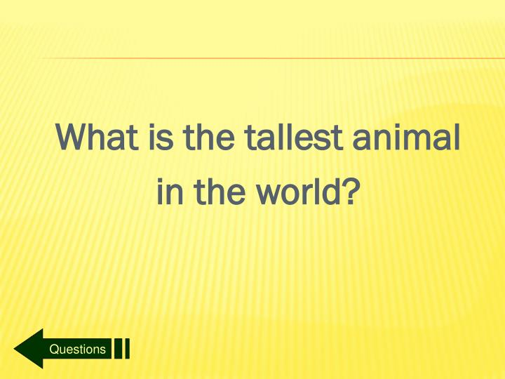 What is the tallest animal