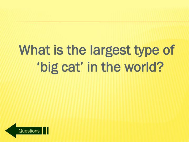 What is the largest type of 'big cat' in the world?
