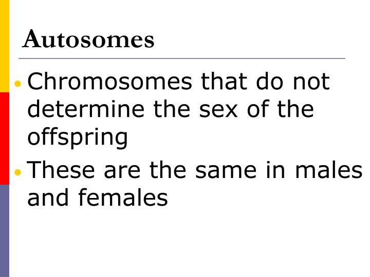 Autosomes