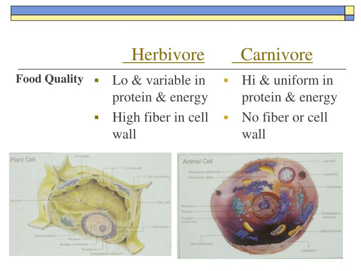 Lo & variable in protein & energy