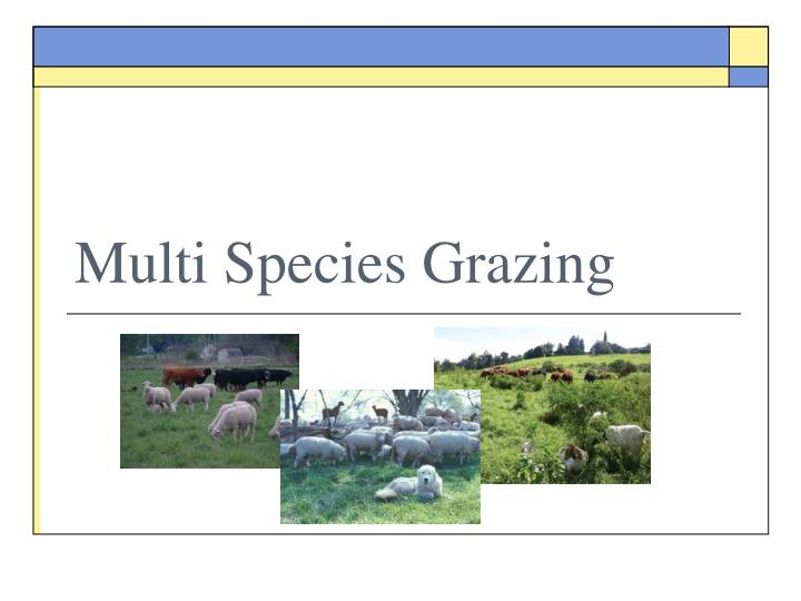 Multi Species Grazing
