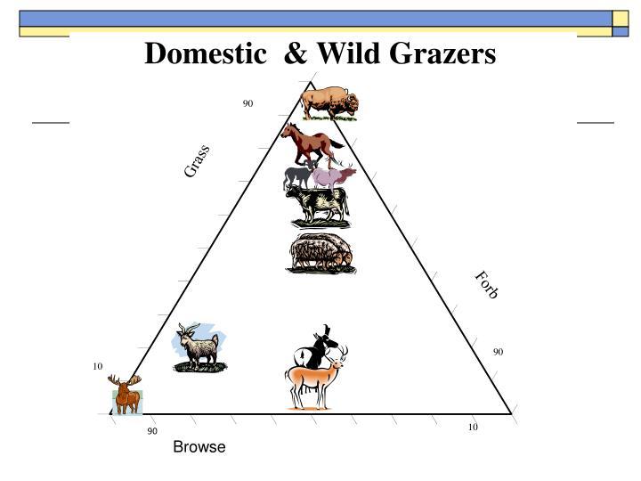 Domestic  & Wild Grazers