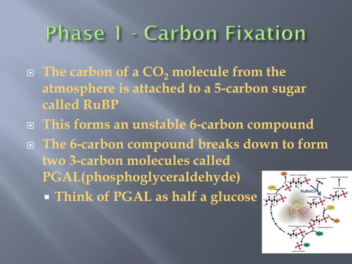 Phase 1 - Carbon Fixation