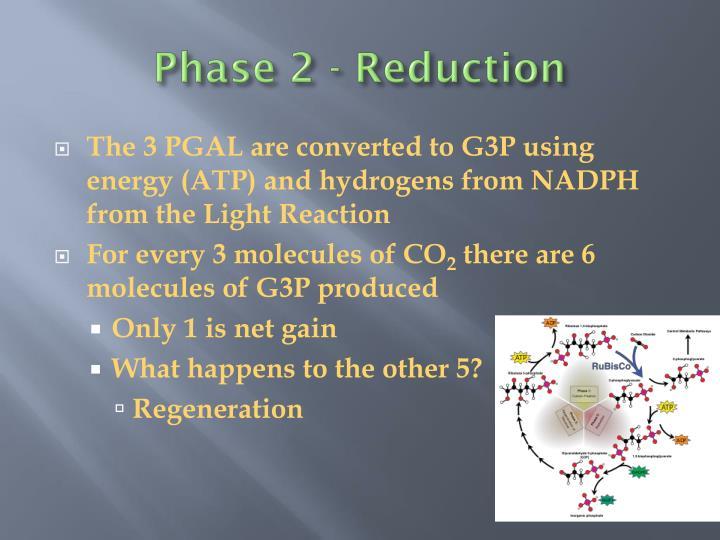 Phase 2 - Reduction