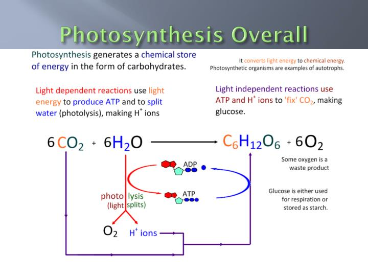 Photosynthesis Overall
