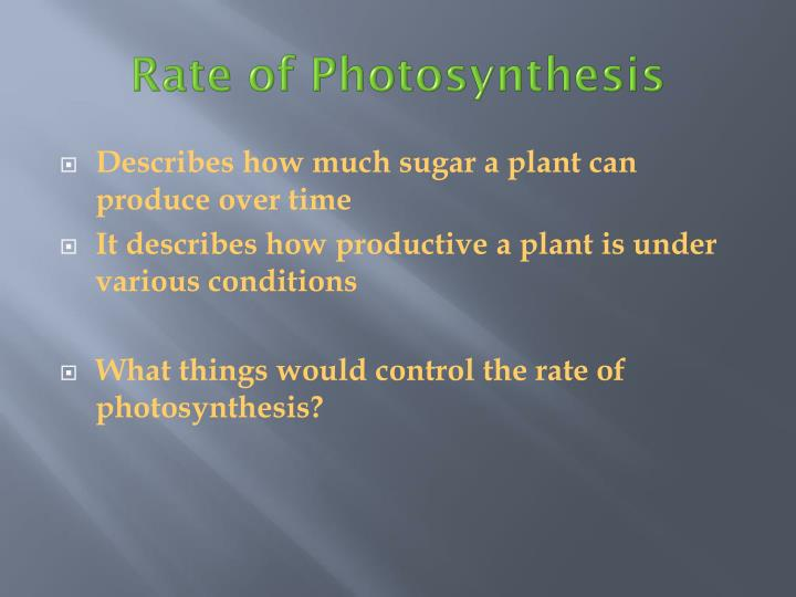 Describes how much sugar a plant can produce over time