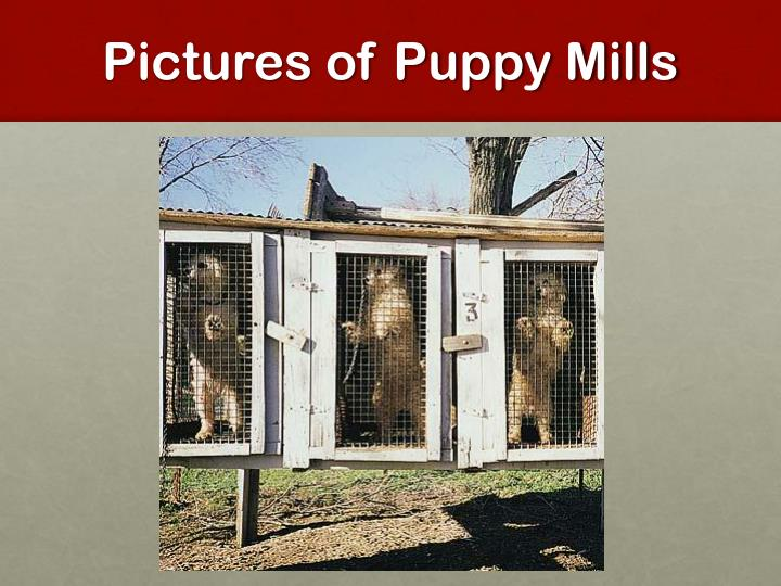 Pictures of Puppy Mills