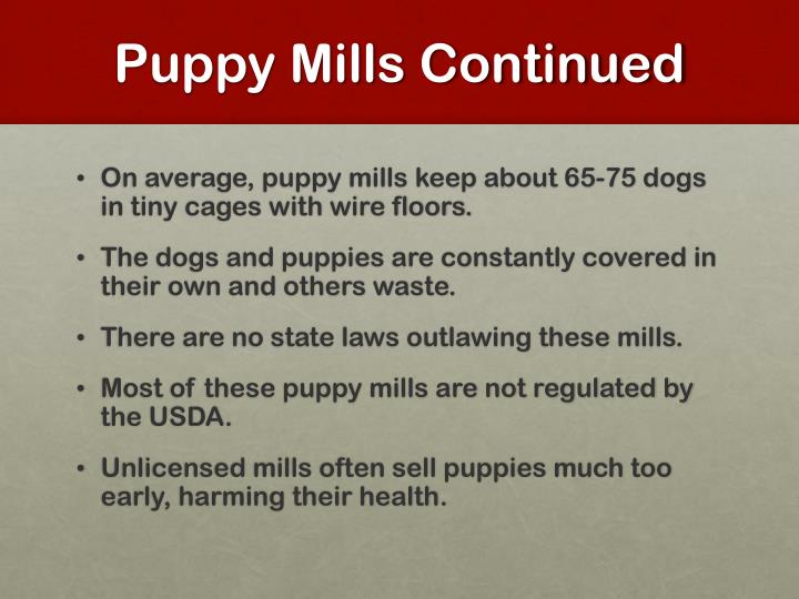 Puppy Mills Continued