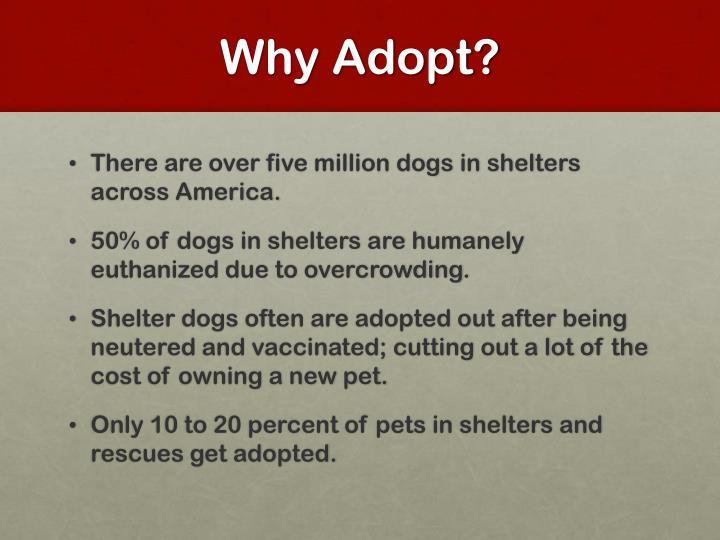 Why Adopt?