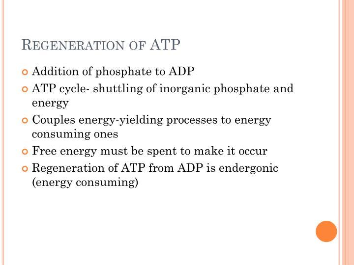 Regeneration of ATP