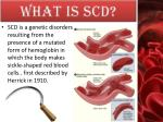 what is scd