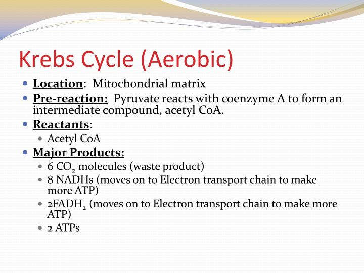 Krebs Cycle (Aerobic)