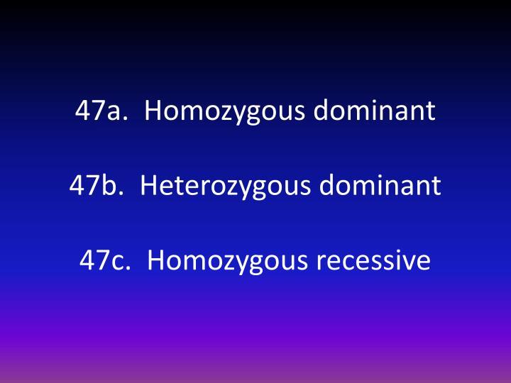 47a.  Homozygous dominant