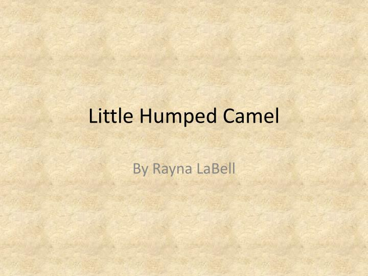 Little humped camel