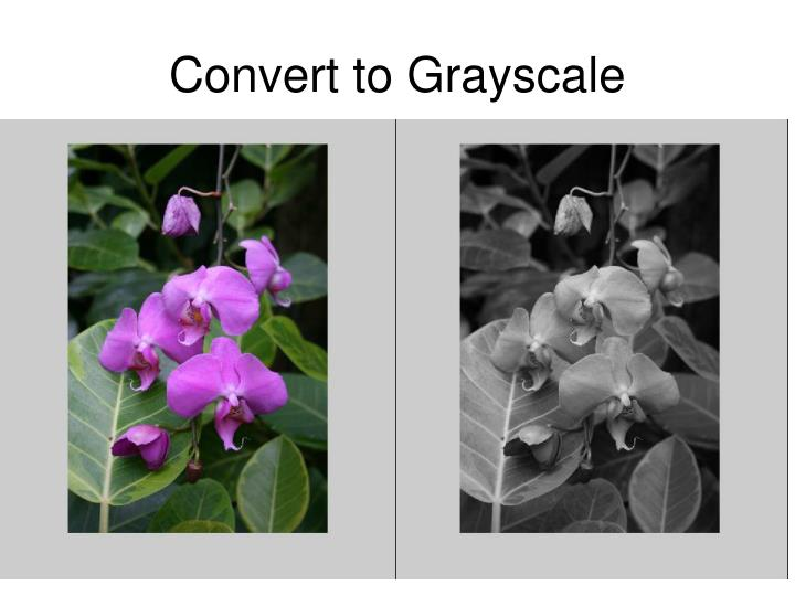 Convert to Grayscale