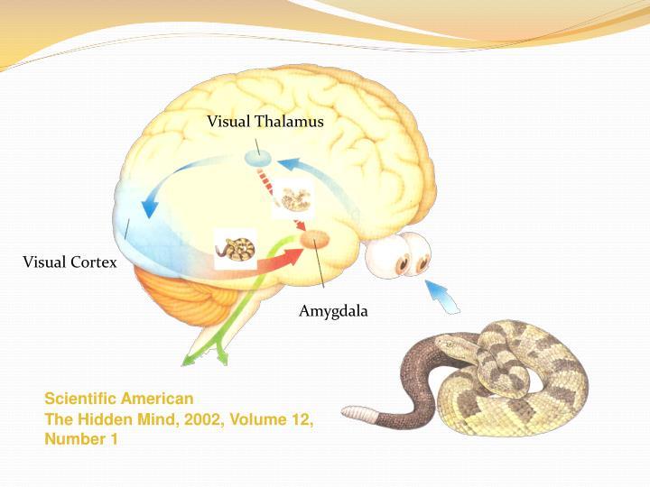 Visual Thalamus