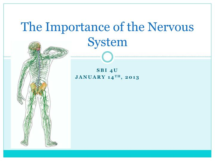 The importance of the nervous system