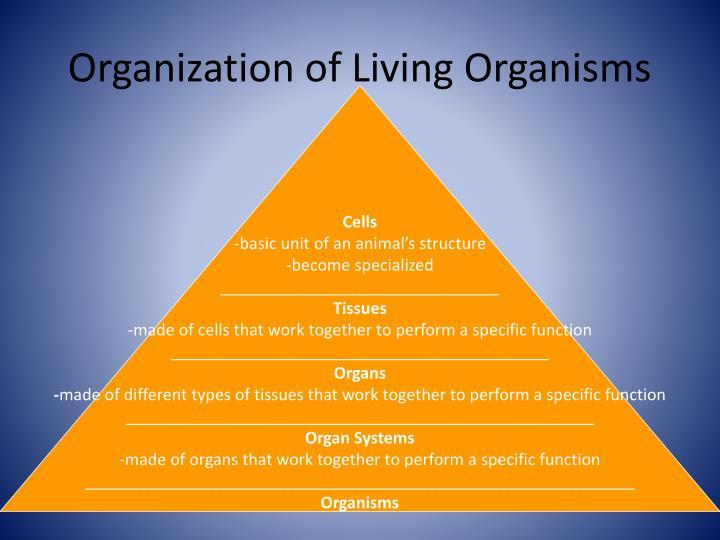 Organization of Living Organisms
