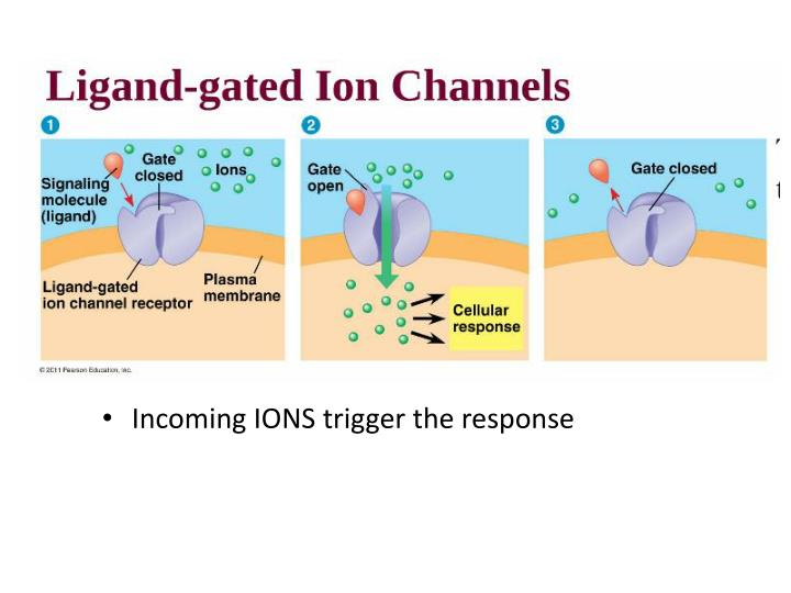 Incoming IONS trigger the response