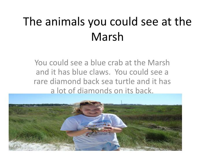 The animals you could see at the Marsh