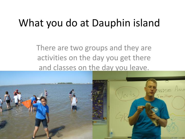 What you do at Dauphin island