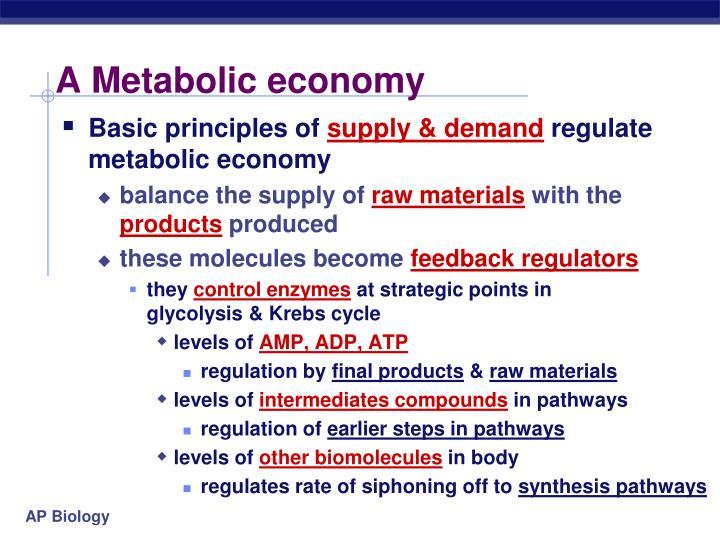 A Metabolic economy