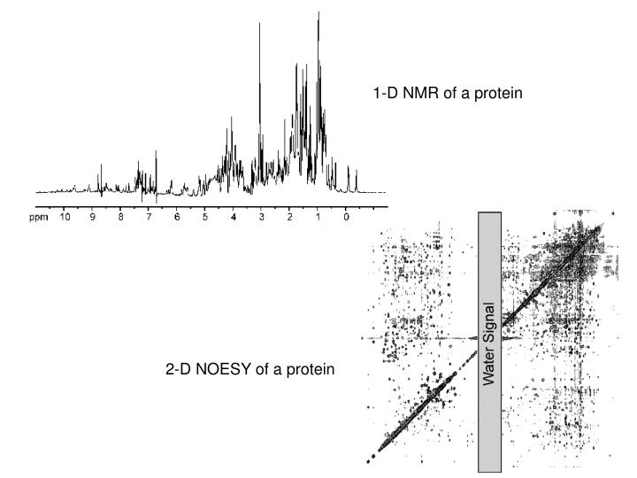 1-D NMR of a protein