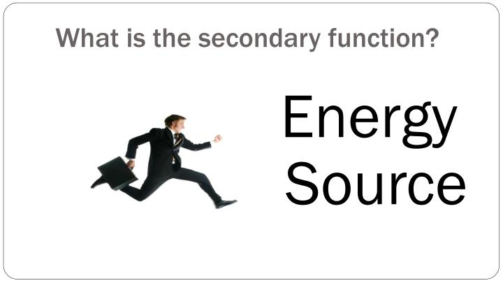 What is the secondary function?