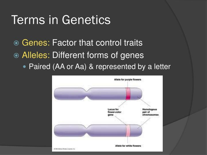 Terms in Genetics