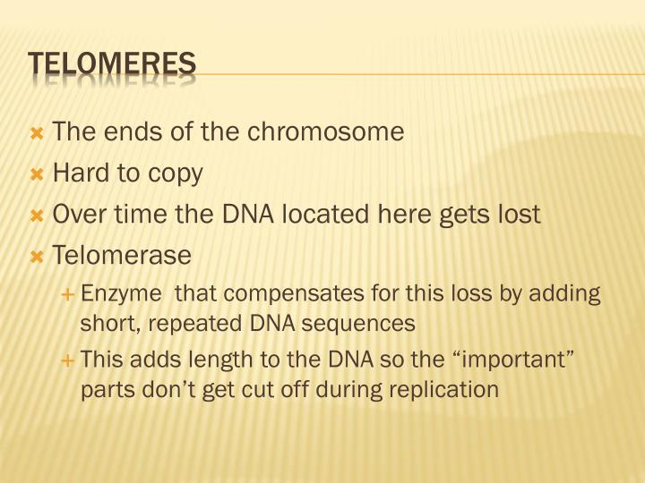 The ends of the chromosome