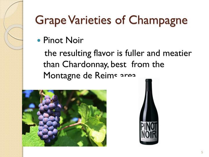 Grape Varieties of Champagne