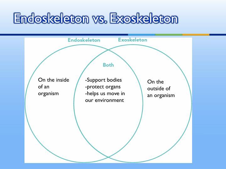 Endoskeleton vs. Exoskeleton