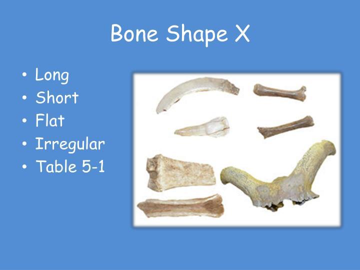 Bone Shape X