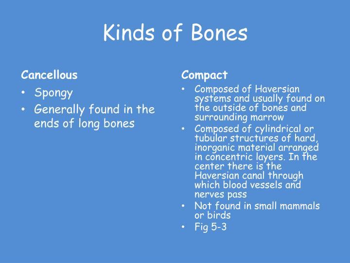 Kinds of Bones