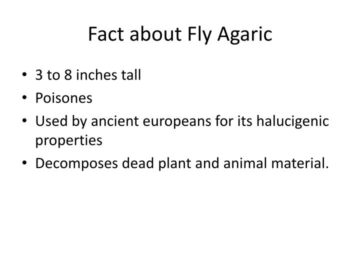 Fact about Fly