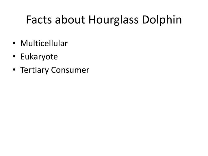 Facts about Hourglass Dolphin
