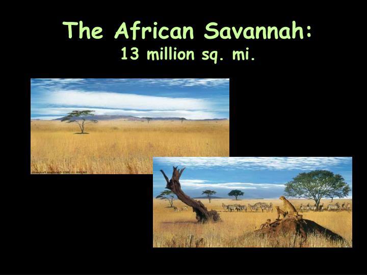 The African Savannah: