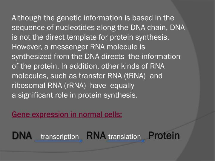 Although the genetic information is based in the sequence of nucleotides along the DNA chain, DNA is not the direct template for protein synthesis.