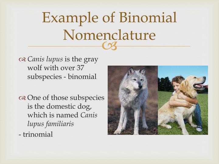 Example of Binomial Nomenclature