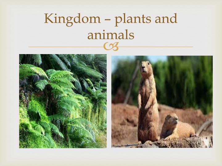 Kingdom – plants and animals