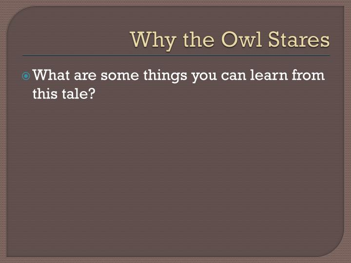 Why the Owl Stares