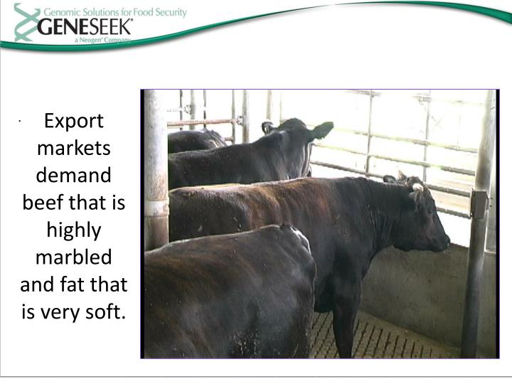 Export markets demand beef that is highly marbled and fat that is very soft.
