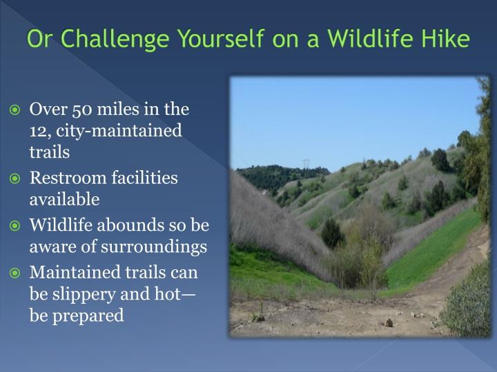 Or Challenge Yourself on a Wildlife Hike