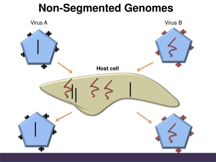 Non-Segmented Genomes
