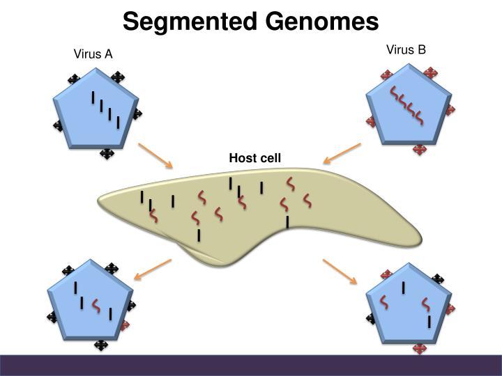 Segmented Genomes
