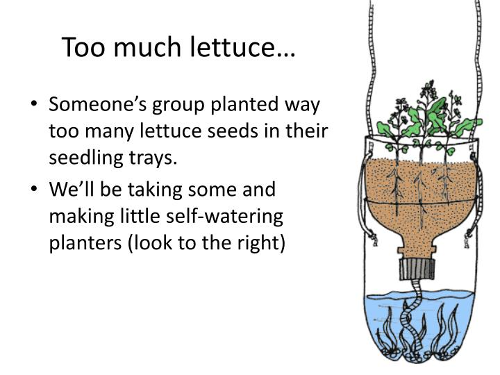 Too much lettuce…